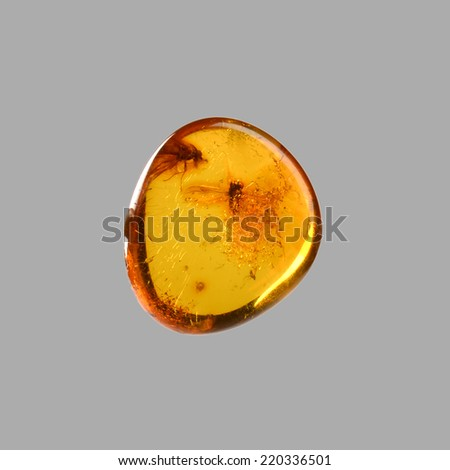 polished amber with flies - stock photo