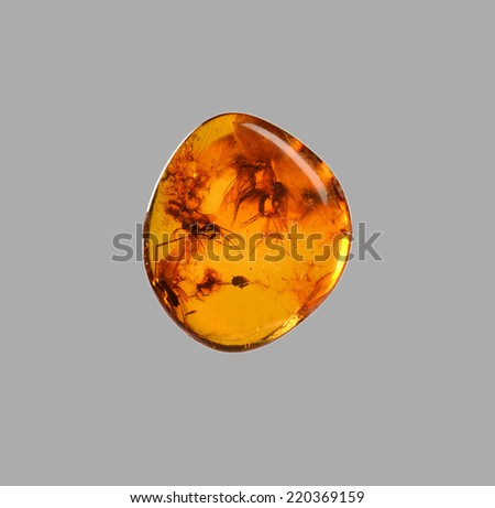 polished amber with mosquitoes inside - stock photo
