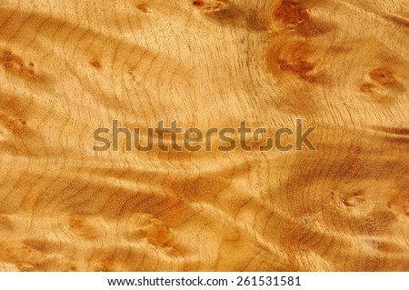 Polished Madrone Root Wood Texture - stock photo