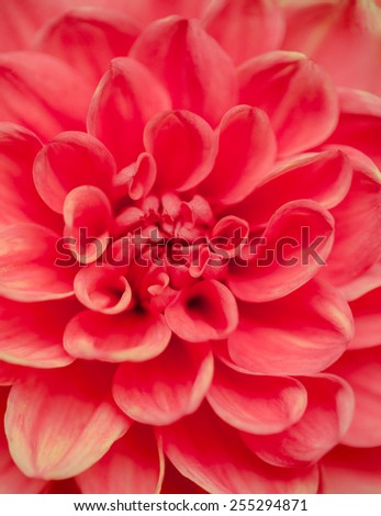 Pollen and petal of flower in texture - stock photo