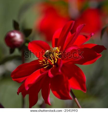 Pollenation - stock photo