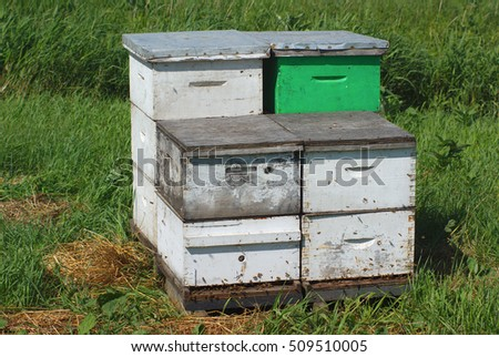 pollination beehive, white and green wooden box beekeeping at the farm