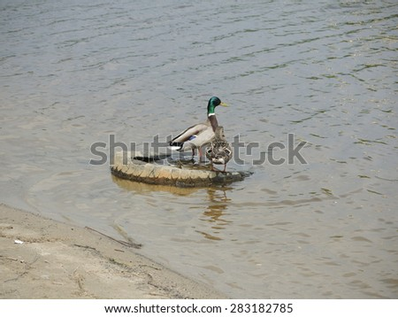 Pollution of nature and animal habitats - stock photo