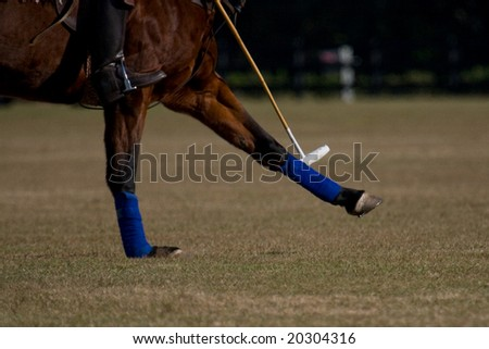 polo horse legs and mallet - stock photo
