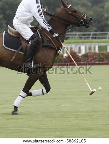 Polo practice - stock photo