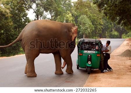 POLONNARUWA, SRI LANKA - DECEMBER 6, 2008: Wild elephant attacks a three-wheeler with passengers in Sri Lanka. No one was injured - stock photo