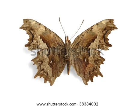 Polygonia egea (Southern Comma) (underside) - stock photo