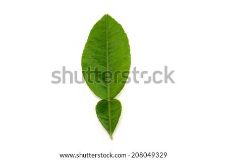 pomelo leaf on white background - stock photo