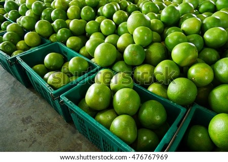 Pomeloes prepared for shipment.