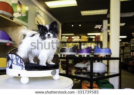 Pomeranian dog sitting in a custom bed - stock photo