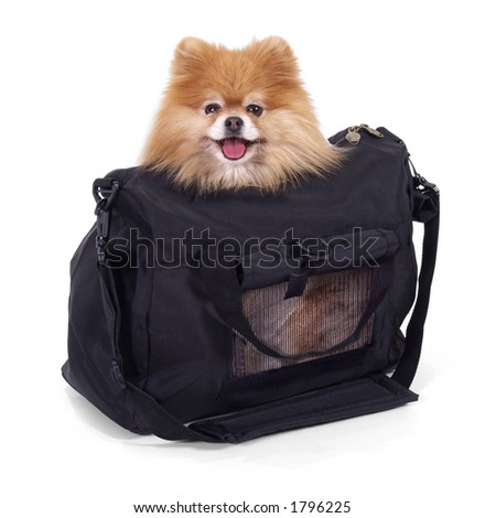 pomeranian inside pet carrier suitcase