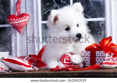 Pomeranian spitz and  red heart-shaped pillow - stock photo