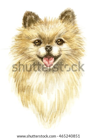 Pomeranian spitz-dog.Image of a thoroughbred dog. Watercolor painting.