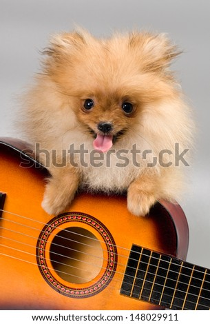 Pomeranian with a guitar - stock photo
