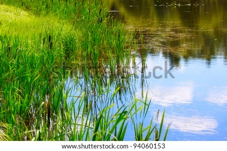 pond and water plants at summer day - stock photo