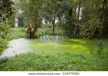 Pond coated by duckweed  in city park - stock photo