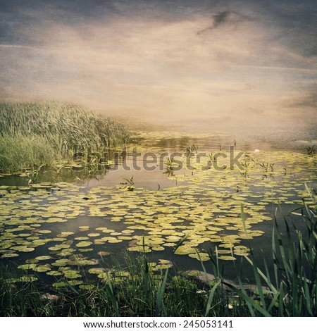 Pond full of waterlilies at sunset - stock photo