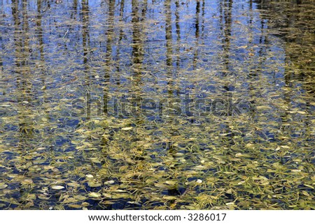 Pond full with algae and a reflecting sky - stock photo