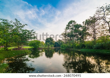 Pond in green park in evening, Park with swamp - stock photo