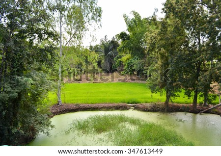 Pond in the forest landscape - stock photo