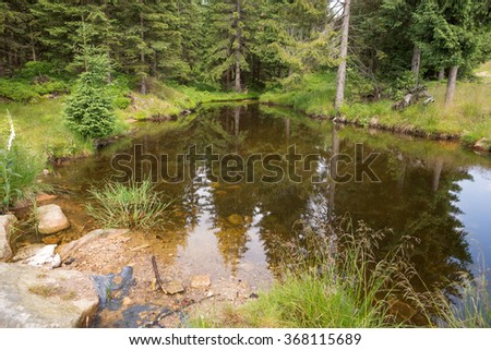 Pond in the forest landscape