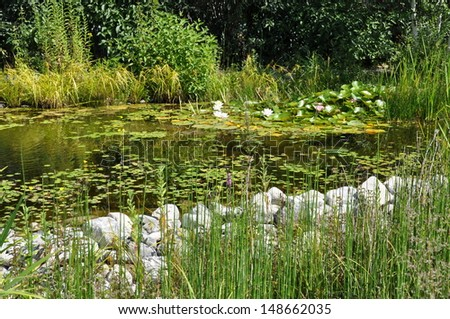 Pond in the garden surrounded by greenery - stock photo