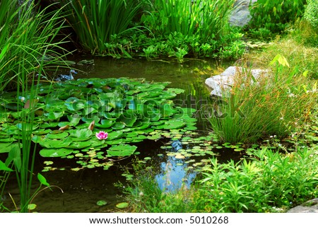 Pond landscaping with aquatic plants and water lilies - stock photo