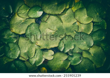pond scenery background or texture - stock photo