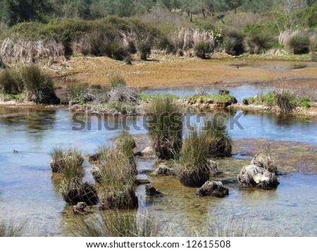 Pond wetland area in Greece - stock photo