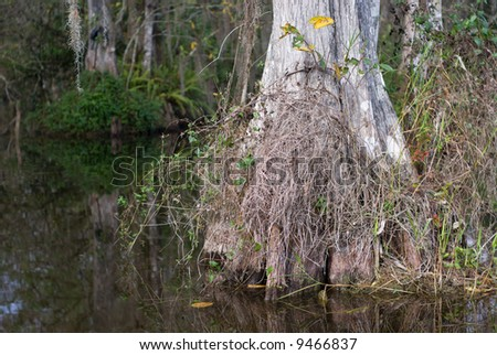 Pond with cypress trees in Florida Big Cypress Swamp. - stock photo