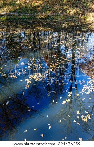 Pond with trees reflection and yellow leaves of oak tree on water surface in autumn park. - stock photo