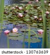 Pond with Water Lily - stock photo