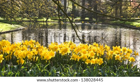 Pond with yellow daffodils and reflection of trees in early morning sun - stock photo