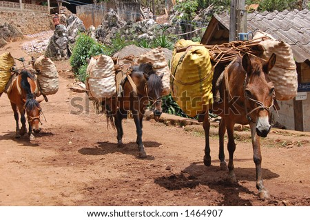 Ponies carrying fruit produce in northern Thailand - stock photo