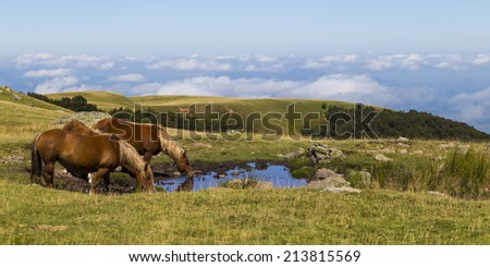 Ponies drinking water from a pool on a mountaintop in the Pyrenees - stock photo