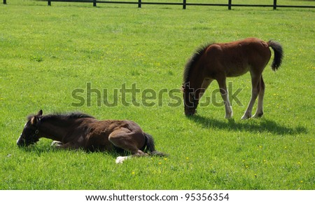 Ponies in a pasture in Ireland - stock photo