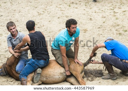 PONTEVEDRA, SPAIN - AUGUST 2 2015: Annual folk festival where are pooled wild horses, foals are separated and where they cut their manes and try to ride them. In the village of Viascon.