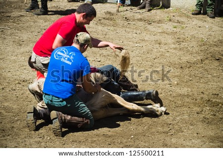 "PONTEVEDRA, SPAIN - AUGUST 5: Unidentified horsemen (Loitadores) attempt to immobilize a wild horse, to cut the mane, in a traditional  ""Haircut to the beasts"" on August 5, 2012 in Pontevedra, Spain."