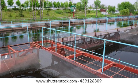Pontoon sturgeon fish farm on a fresh water river