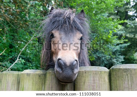 pony and wooden fence