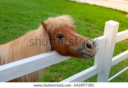 Pony Brown stood near the fence.