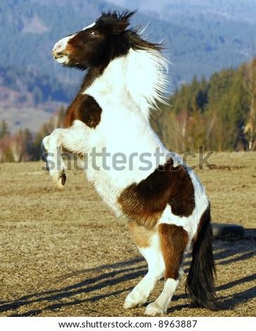 pony horse jumping - stock photo