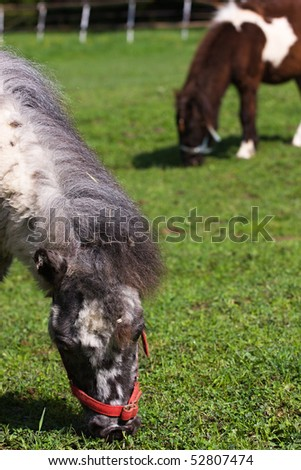 Pony in the meadow in the paddock
