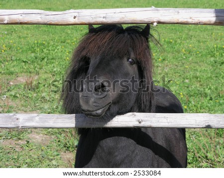 Pony looking out of the corral