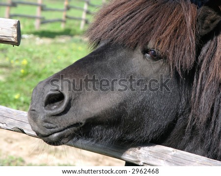 Pony looking out of the corral (2) - stock photo