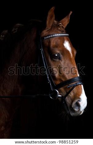 Pony on black background - stock photo