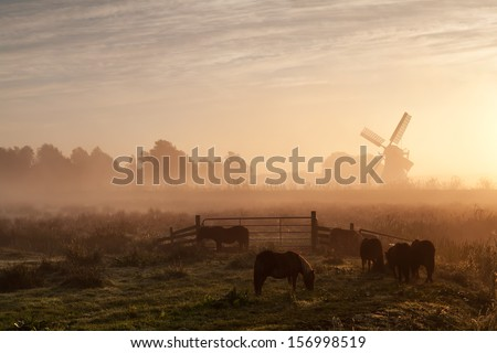 pony on pasture and windmill in dense sunrise fog, Holland - stock photo