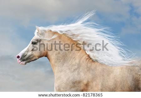 pony portrait in action - stock photo