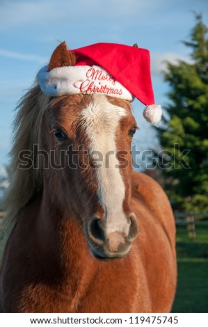 Pony wearing a hat with a Christmas message - stock photo