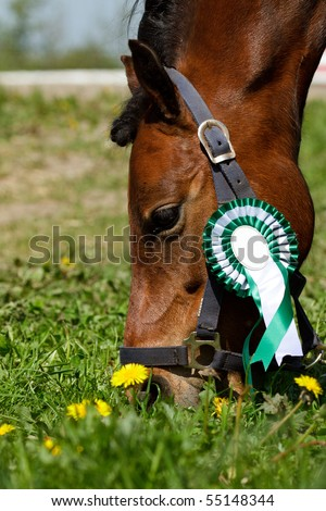 Pony with green rosette - stock photo